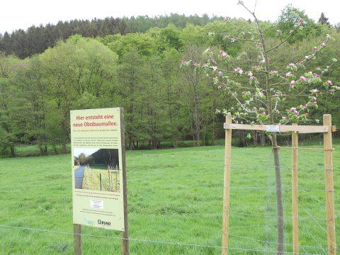 Obstgarten Simonskall